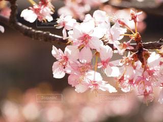 春 - No.403467