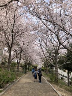 桜並木と子供たちの写真・画像素材[1131877]