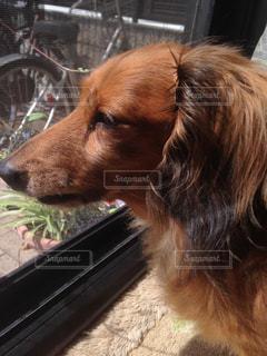 No.285578 犬