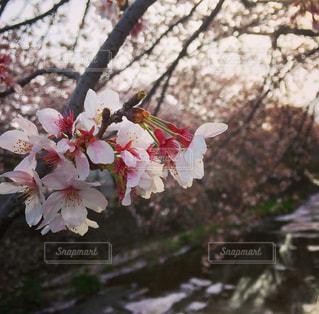 春 - No.411976