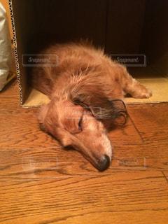 犬の写真・画像素材[474405]