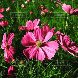 近くの花のアップ - No.843367