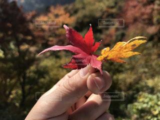 森の植物を持っている手の写真・画像素材[872988]