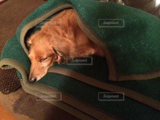 緑の毛布の上に横たわる犬 - No.872994