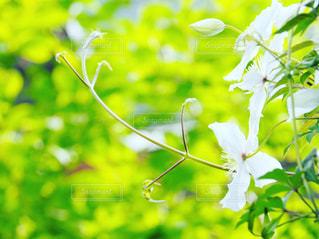 緑の写真・画像素材[467664]