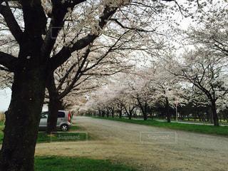 春 - No.402268