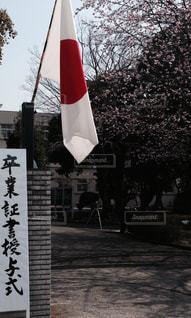 春 - No.368437