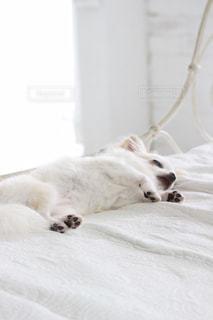 犬の写真・画像素材[240889]