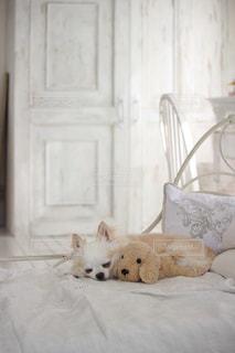 犬の写真・画像素材[240890]