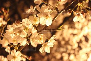 花の写真・画像素材[428128]