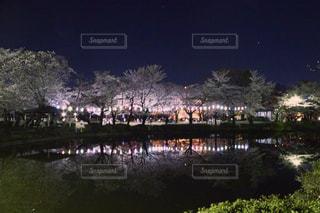 自然,桜,夜,夜桜,岩槻,岩槻城址公園,さいたま