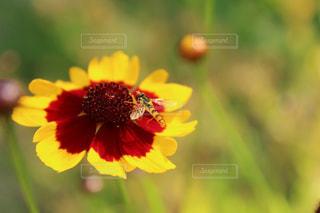 自然の写真・画像素材[610062]