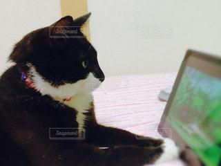 猫の写真・画像素材[281235]
