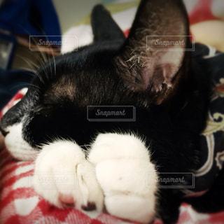 猫の写真・画像素材[282986]