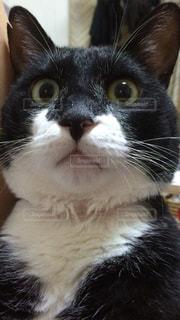 猫の写真・画像素材[315632]
