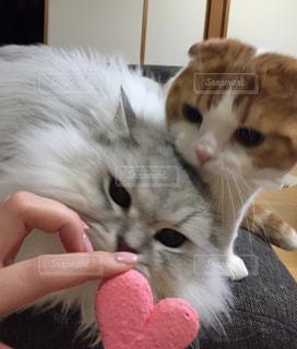 猫 - No.329355