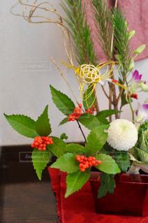花の写真・画像素材[303967]