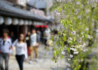 花の写真・画像素材[405204]