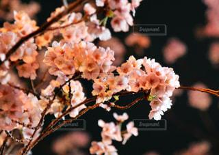 花の写真・画像素材[426877]
