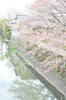 春の写真・画像素材[448282]
