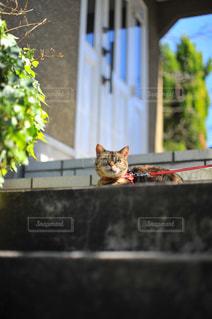 猫の写真・画像素材[452744]