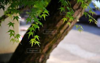 緑の写真・画像素材[453662]