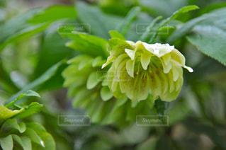 花の写真・画像素材[453664]
