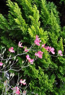 花の写真・画像素材[457673]