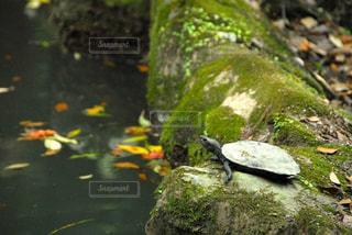 緑の写真・画像素材[457681]