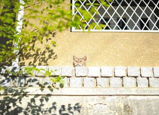 猫の写真・画像素材[459749]