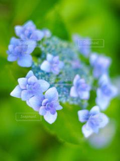 花の写真・画像素材[556669]