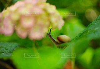 花の写真・画像素材[556677]