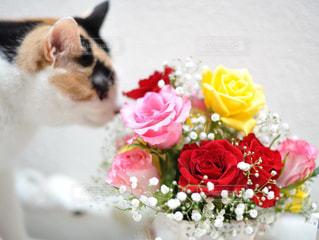 猫の写真・画像素材[560135]