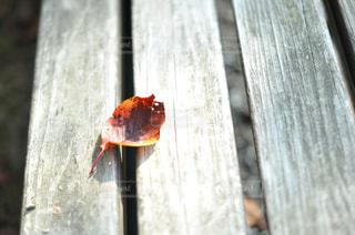 秋模様の写真・画像素材[809448]