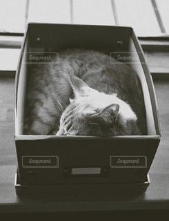 箱入り。の写真・画像素材[838159]
