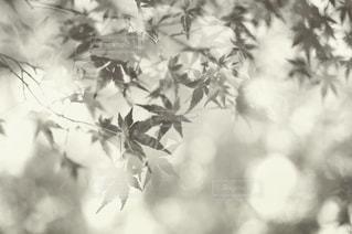 近くの木のアップの写真・画像素材[846820]