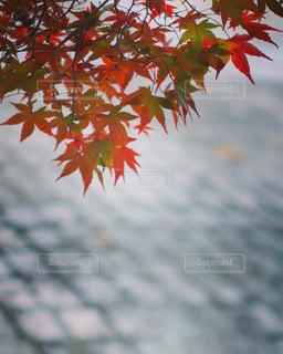 秋といえば…の写真・画像素材[871399]
