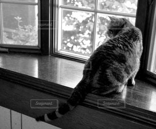 窓辺からの写真・画像素材[993423]
