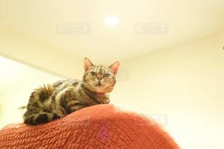 愛猫photoの写真・画像素材[1259587]