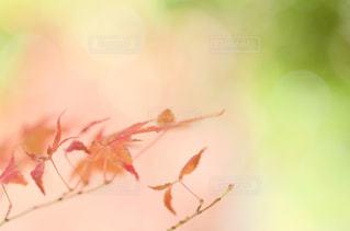 秋といえばこれの写真・画像素材[1636048]