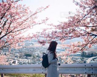 河津桜と女性の写真・画像素材[403402]