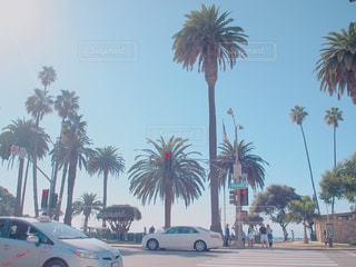 ヤシの木の前に車が並んでいます。の写真・画像素材[1018843]
