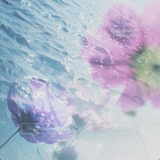 コスモスと波の写真・画像素材[1512146]
