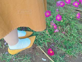 コスモスと秋の足元の写真・画像素材[1581503]
