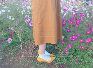 コスモスと秋の足元の写真・画像素材[1581521]