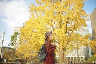 イチョウの木と女性の写真・画像素材[1581612]