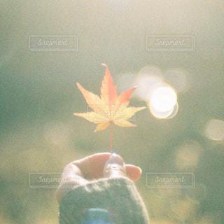 色づいたもみじの葉の写真・画像素材[1611612]