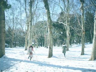 雪の中を走り回る女性たちの写真・画像素材[1657332]