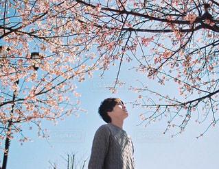 桜と青空と男性の写真・画像素材[1693403]