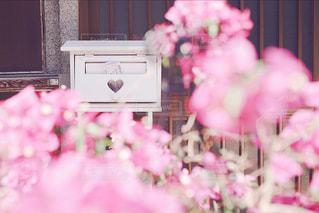 ピンクの花とハートのポストの写真・画像素材[1790921]
